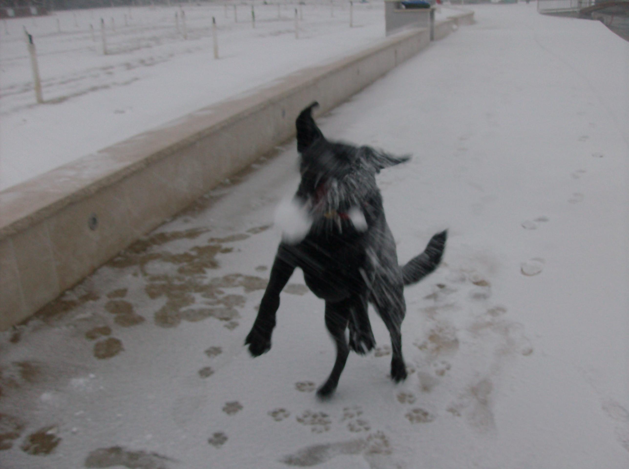 Aika in kepa snega